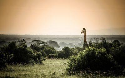 Pure Tanzania